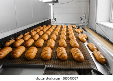 Loafs of fresh hot bread out of the oven on a conveyor belt in the bakery.