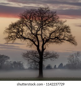 Loan tree at sunset in foggy misty conditions during winter