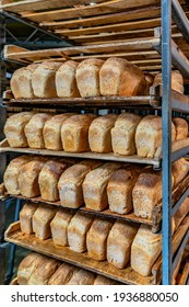 loaves of bread made from light flour on industrial shelves