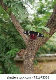 lobely beautiful butterfly