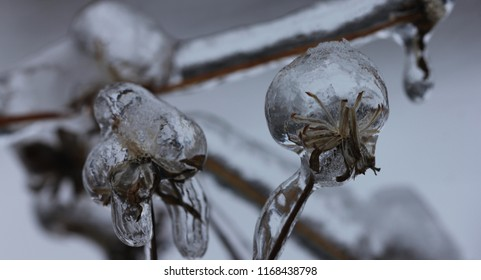 LOBNYA, MOSCOW OBLAST / RUSSIA - DECEMBER 01 2018: Consequences of ice rain in Moscow Oblast