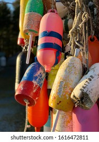 Lobster Buoys Hanging From A Tree