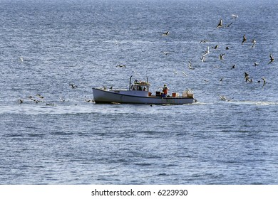 Lobster fishing vessel with seagulls following
