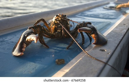 Lobster on a boat