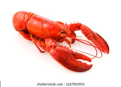 Lobster on white background