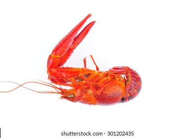 Lobster on a white background