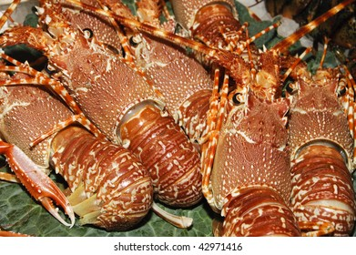 a lot of lobsters of different sizes