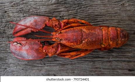 Lobster's favorite food.