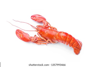 Lobsters isolated on white background,red lobster.