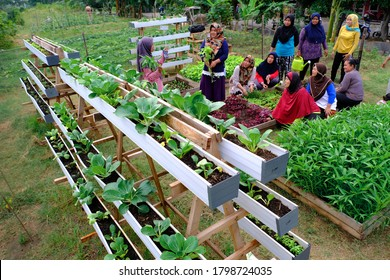 The local community in Marunda Area, Jakarta, Indonesia develop urban farming using existing space to generate income (Jakarta, January 2020). Its helps them for better livelihoods in urban area.