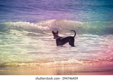 Local dog playing wave on the beach, Vintage filter