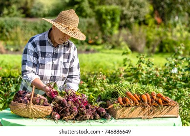 Local farmer market with produce on table, woman selling vegetables from organic farming
