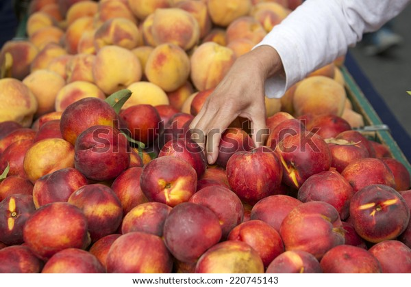 Local farmers market fresh peaches and nectarines, woman hand inspecting fruit to purchase