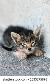 a local homeless kitten in the Philippines needs to be taken care off
