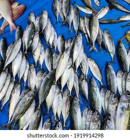 In local market its called Oci, being most popular fish in market. - Shutterstock ID 1919914298