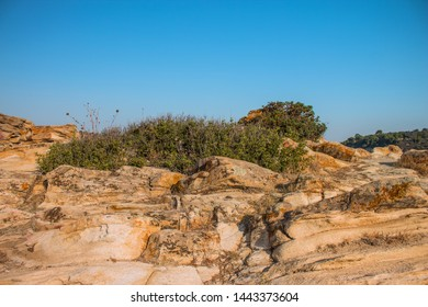 local scenic landscape object dry stone rock with bush plant in south America dry Savannah wilderness natural environment