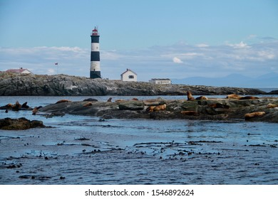 Local seals at Race Rocks light house and island on the Salish Sea, off the coast of Victoria, British Columbia