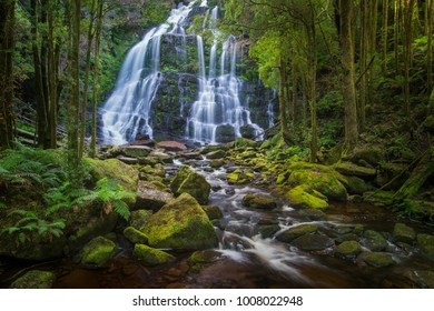 Located in the West Coast region of Tasmania, Nelson falls is a majestic cascading waterfall. It is 30 KM east of Queenstown along the Lyell Highway. The grandeur of this falls is just indescribable.