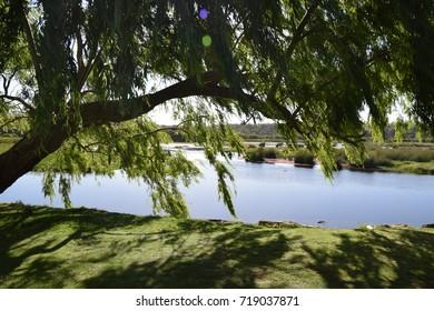Loch McNess behind a tree at Yanchep National Park, Western Australia