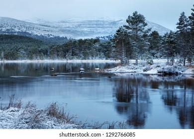 Loch Morlich in winter, Scotland, UK