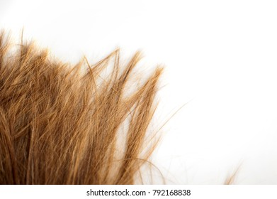 lock of hair from the hairdresser