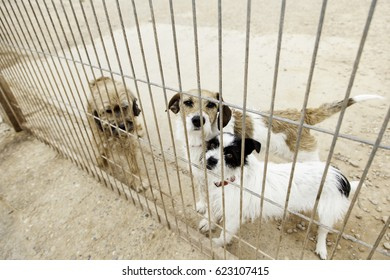 Locked kennel dogs abandoned, sadness