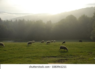 Locol biological sheep farm landscape view in European. Organic farming in the top of the mauthant in an early morning.  in the morning on top hill cheep farm.