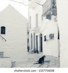 Locorotondo, Italy - August circa, 2016: Gray cat in a narrow street of Locorotondo, paving made of large stone pebbles.