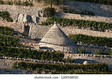 Locorotondo Italy, September 2018. Traditional white-washed trulli house with conical roof located on a terrace outside the town of Locorotondo in Puglia, Southern Italy.