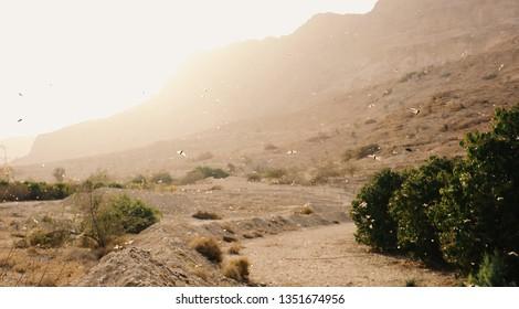 Locust plague in the Judean Wilderness