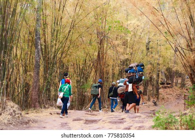 Loei, Thailand-December 25, 2015 - The photo of Hiker at Phu Kradueng National Park, Travel in Thailand, The mountain is full of bamboo forest.