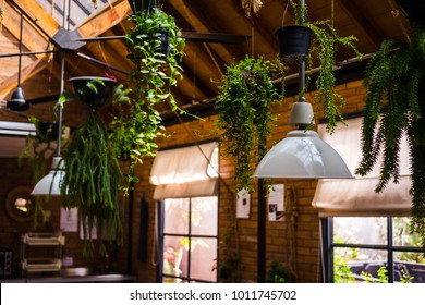 Loft ceiling design. Live plants in industrial creative minimalistic cafe interior, simplicity concept, warm brown yellow colors