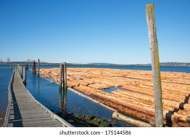 Log Boom floating in water tied up alongside pier. Timber Industry. Copy space.