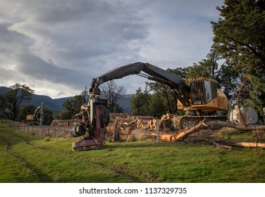 A log harvester ready to work at a forestry and logging site