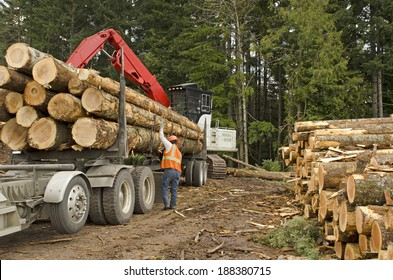 A log loader or forestry machine loads a log truck at the site landing with the driver securing the load in southern Oregon
