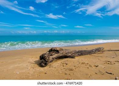 Log on the beach