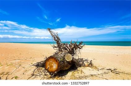 Log on sand beach. Sandy beach log view. Log beach scene. Beach log view