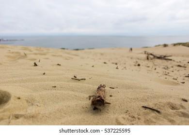 "A log in sand dunes in ""Nida"""