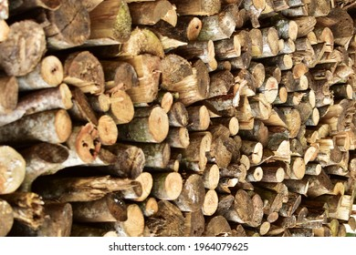 Log spruce trunks pile. Sawn trees from the forest. Logging timber wood industry. Cut trees along a road prepared for removal. Rustic wooden posts stack of outdoor. Pile of firewood.