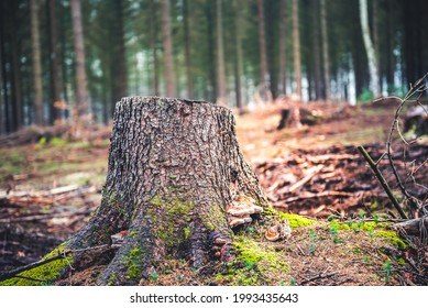 Log spruce trunks pile. Sawn trees from the forest. Logging timber wood industry. Cut trees along a road prepared for removal