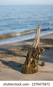 A log sticking out of the beach with open water in the background.