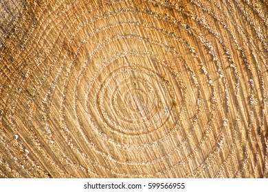 Log and timber cross section, pattern and grains of the logs