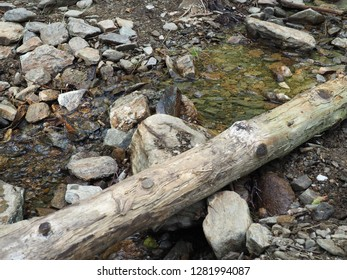 Log of a tree at the brook in summer