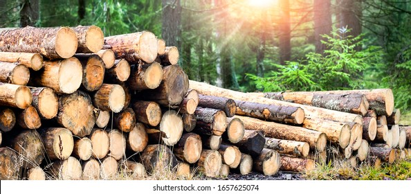 Log trunks pile, the logging timber forest wood industry. Wide banner or panorama wooden trunks.