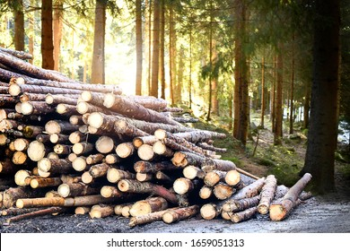 Log trunks pile, the logging timber forest wood industry. Wooden trunks timber harvesting.
