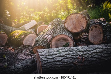 Log trunks pile, the logging timber forest wood industry. Banner or panorama of wood trunks timber harvesting in forest. Wood cutting in forest.