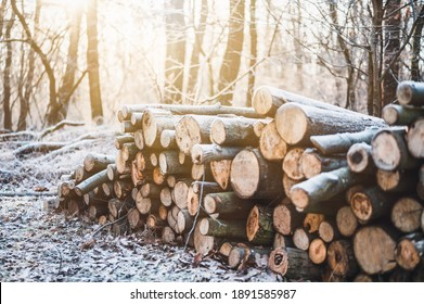 Log trunks pile, the logging timber forest wood industry. Banner or panorama of wood trunks timber harvesting in forest. Wood cutting in winter forest.