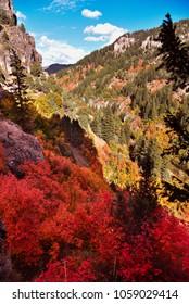 Logan Canyon's Fall Colors