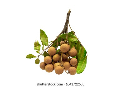 logan fruit with leaves isolated on white background