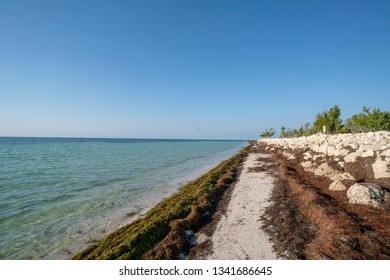 Loggerhead Beach at Bahia Honda State Park on Big Pine Key in Florida. The washed up sea grass prevents beach erosion and you cannot remove it.